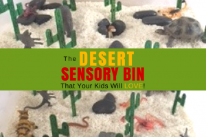 Desert Sensory Bin