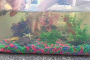 Fish Tank Sensory Bin