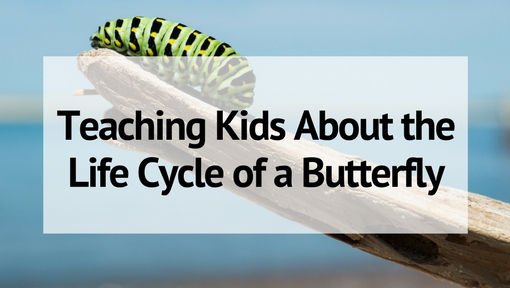 How to Teach Kids About the Life Cycle of a Butterfly